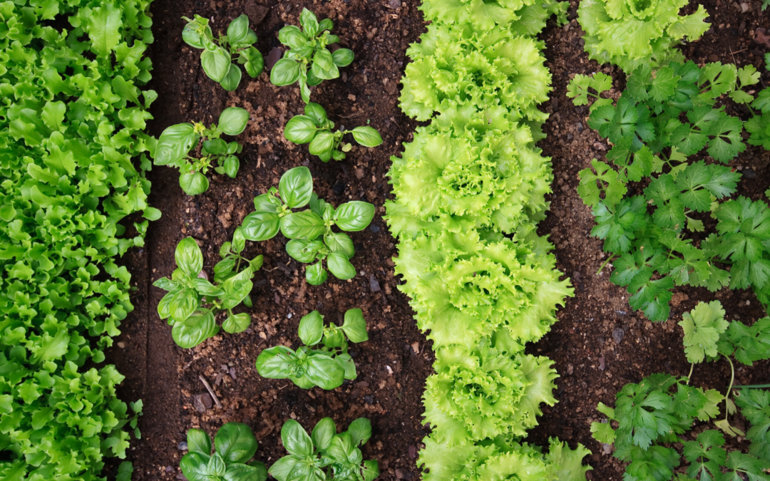 5 tips for growing a tasty garden